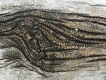 Mycket gammal Wood bakgrund Royaltyfri Foto