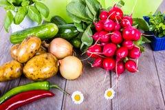 Mycket grönsak för den sunda salladen Royaltyfri Bild