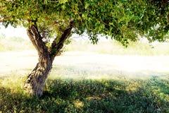 Mycket grunt djup av fältet Branchs och stam Royaltyfri Fotografi
