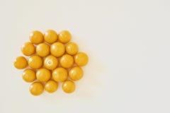 Mycket guld- bär Royaltyfri Bild