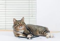 Mycket gullig grå katt i en veterinär- klinik royaltyfria foton