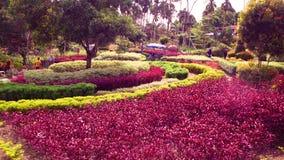 Mycket härlig blommaträdgård som tycker om helgen royaltyfri foto