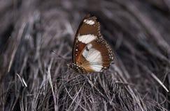 Mycket härlig fjäril Arkivfoton
