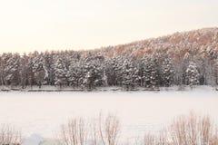 Mycket härlig snö-täckt skog på solnedgången Frostig vinterdag Royaltyfri Bild