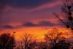 Mycket härlig solnedgång i parkera Arkivfoto
