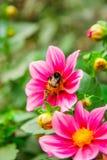 Mycket härligt blomma för blomma, ljust, grönt som är naturligt, natur Royaltyfri Foto