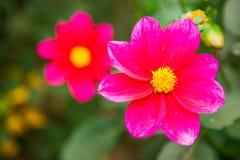 Mycket härligt blomma för blomma, ljust, grönt som är naturligt, natur Arkivfoton