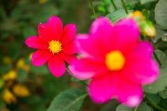 Mycket härligt blomma för blomma, ljust, grönt som är naturligt, natur Royaltyfria Bilder