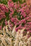 Mycket härligt blomma för blomma, ljust, grönt som är naturligt, natur Arkivbilder
