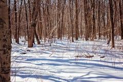 Mycket insnöat den ljusa solen för vinterskog, skuggor Arkivfoton