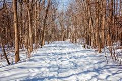 Mycket insnöat gränden av vinterstaden parkerar Ljus sol, skuggor Royaltyfri Foto