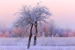 Mycket kall vintermorgon i Litauen, omkring - 24 grader kallt 2016-01-08 Arkivfoton