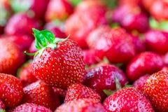 Mycket läckra mogna jordgubbar Arkivbild