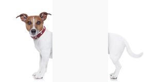 Mycket lång hund Arkivbild