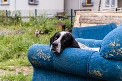 Mycket ledsen gatahund på en soffa som kastas till avfall royaltyfri fotografi