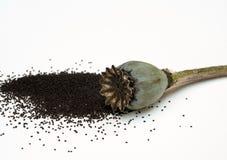 Mycket lilla Poppy Seeds från öppnade orientaliska Poppy Pod Arkivbild