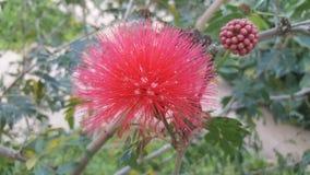 Mycket lilla röda blommor Arkivbild