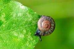 Mycket lilla snails. Royaltyfri Fotografi