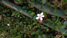 Mycket liten blomma Royaltyfria Foton
