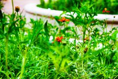 Mycket liten blomma Arkivfoton