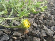 Mycket liten blomma Royaltyfria Bilder