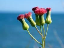 mycket liten blomma Arkivbilder