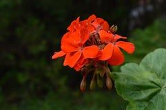 Mycket liten blommadam Arkivbilder