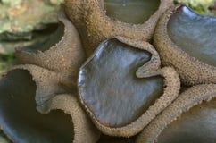 Mycket liten brunt texturerad svamp Arkivfoton
