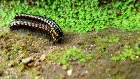 Mycket liten Caterpillar utforskning royaltyfria bilder