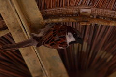 mycket liten fågel Arkivbilder