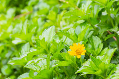 Mycket liten gul blomma och grön sidaträdgård royaltyfria bilder