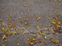 Mycket liten gulaktig blomma som faller på trottoar Arkivfoton
