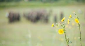 Mycket liten guling blommar i äng med den suddiga naturen och tjäna som soldat bakgrund Copyspace övre sikt för slut Arkivfoto