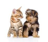 Mycket liten liten kattunge och valp som ser de Arkivfoto