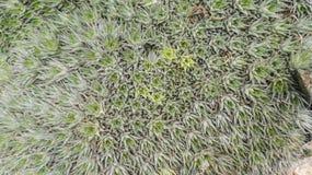 Mycket liten metallisk kaktus i trädgården Arkivfoton