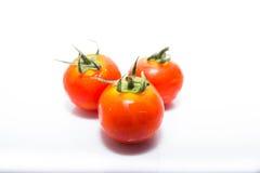 Mycket liten ny tomat Arkivfoto
