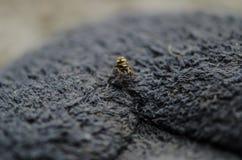 Mycket liten spindelkrypning på ett mattt golv Royaltyfri Foto