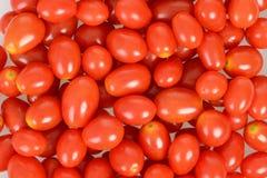 Mycket liten tomatcloseup Fotografering för Bildbyråer