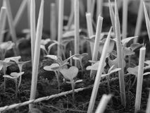 Mycket liten trädgård med pinnen Arkivbild
