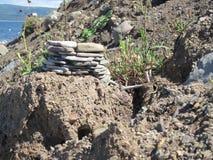 Mycket liten uppehälle på kusten arkivbilder