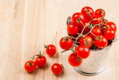 Mycket litet behandla som ett barn tomater i en liten hink Arkivfoton