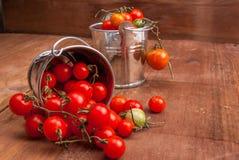Mycket litet behandla som ett barn tomater i en liten hink Royaltyfria Bilder