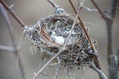 Mycket litet vitt ägg i rede Royaltyfri Fotografi