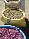 Mycket moroccan krydda Arkivbild