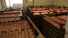Mycket nya ägg arkivfilmer