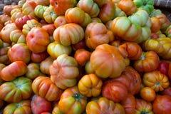 Mycket nya tomater Royaltyfri Bild