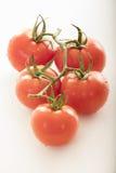 Mycket nya tomater arkivfoto