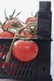 Mycket nya tomater fotografering för bildbyråer