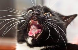 mycket ond katt royaltyfri fotografi