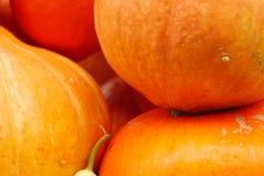 Mycket orange pumpor Förberedelse för ferien av allhelgonaaftonen Royaltyfri Fotografi